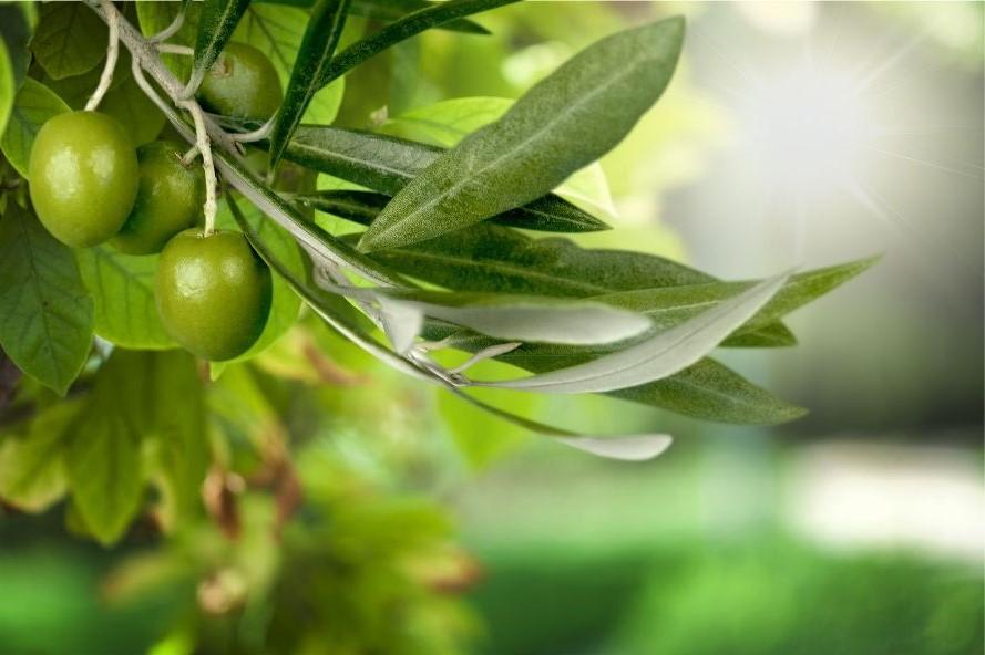 оливка фото миссия1