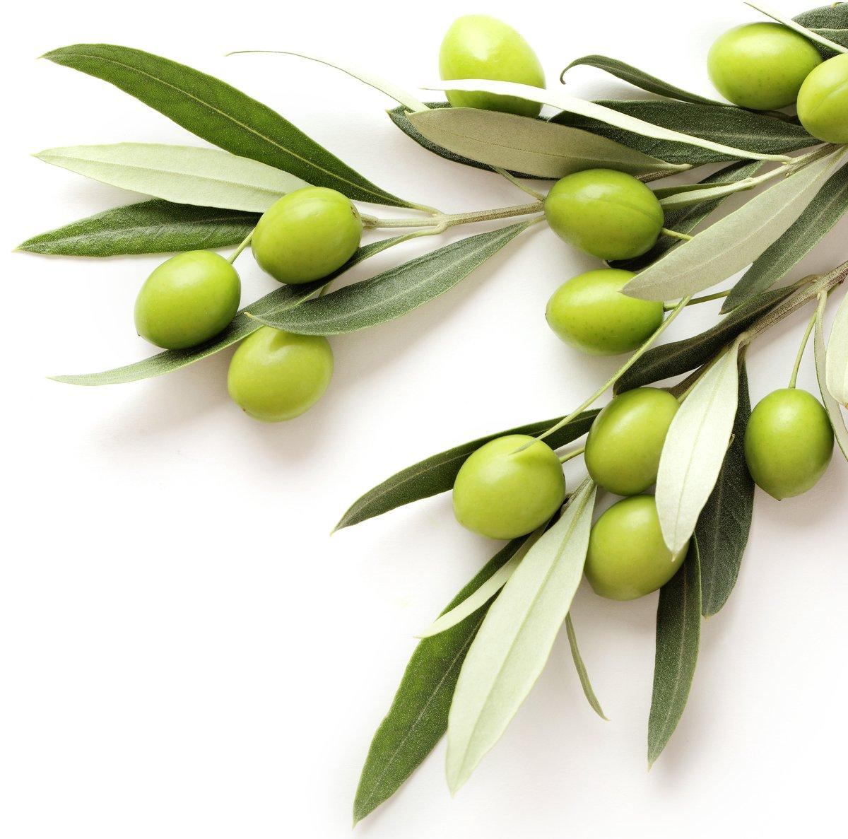 olives_1200x1200
